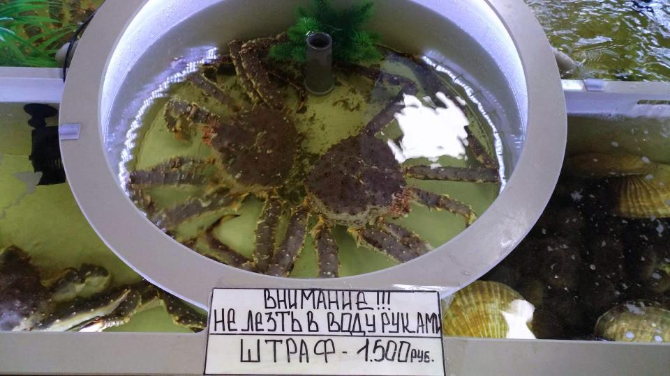 生蟹點賣?自己計計匯率。