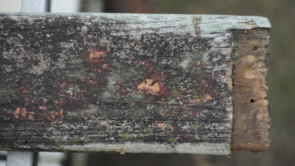 木上亦有相同的粉肉色。