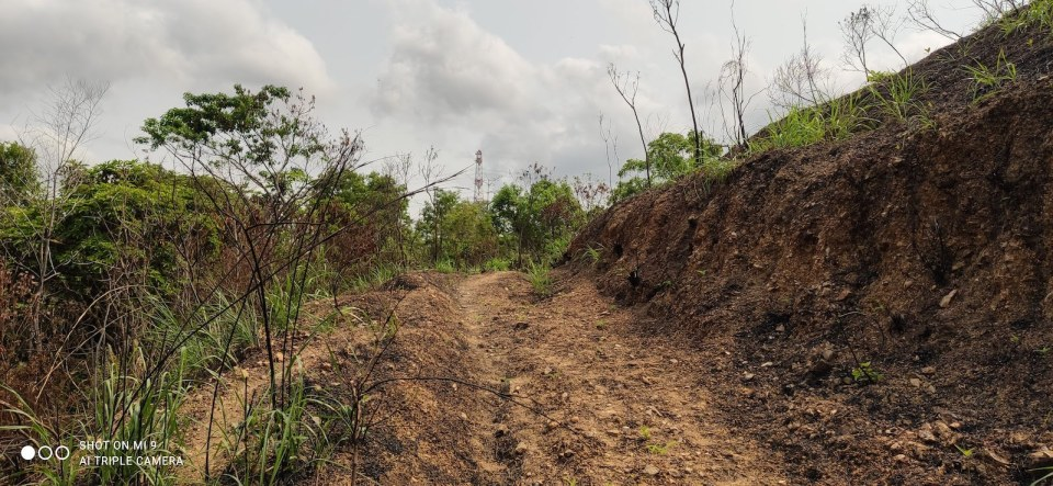 山火後重現的泥路,過去通往山腰的一所村屋。