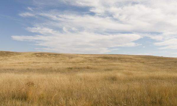 Why don't trees grow in the Great Plains of North America?