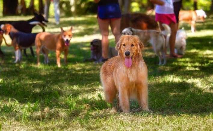 Um-dia-de-cão-Unahy-Foto-Vanessa-Sallesaro-1 Title category