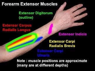 تأثير العادة السرية على لاعب كمال الأجسام وهرمون الذكورة
