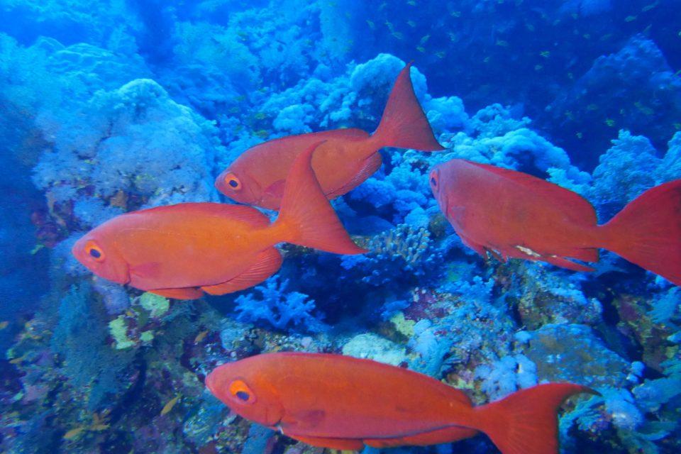 Mer Rouge le royaume des poissons multicolores