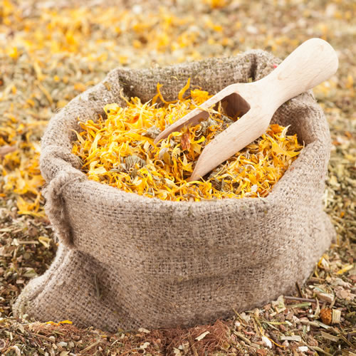 Magical Properties of Herbs, Plants and Trees