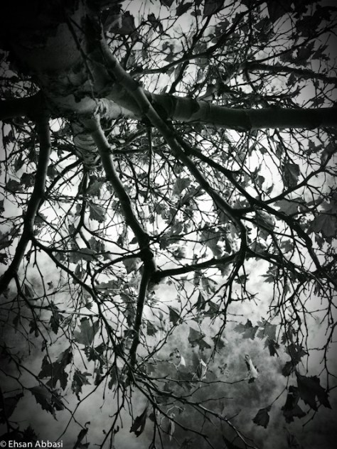 Tree, Branches and Leaves