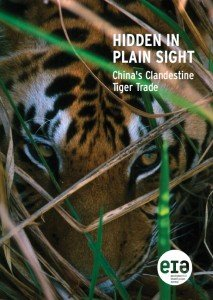 China's Clandestine Tiger Trade