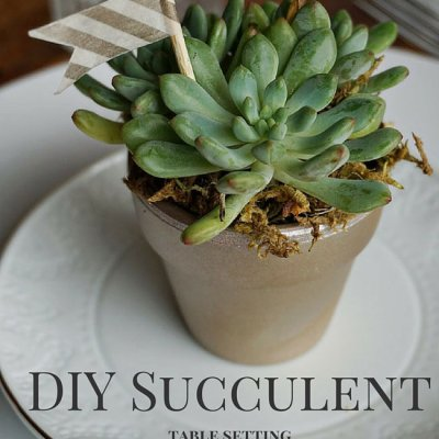 Simple & Elegant Succulent Table Setting