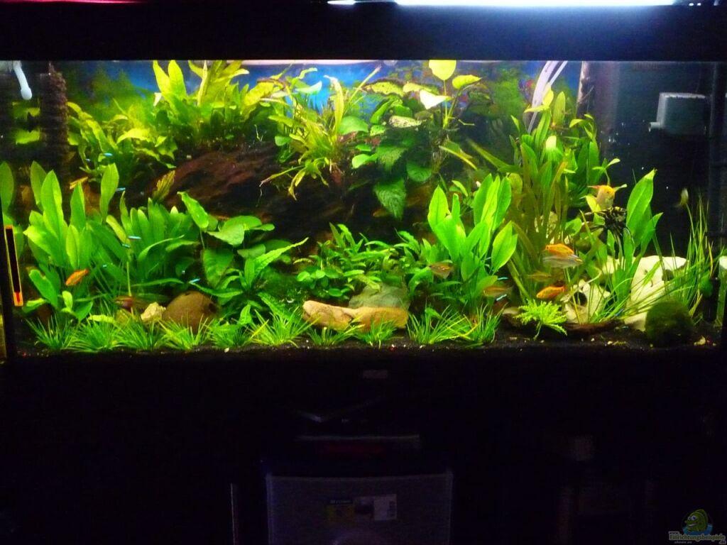Aquarium Von Chris84 Rio 300