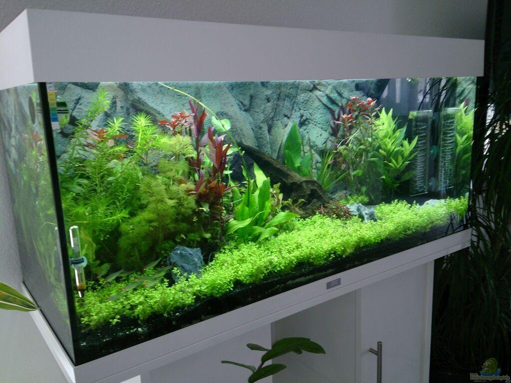 Aquarium Von Franky Juwel Rio 180