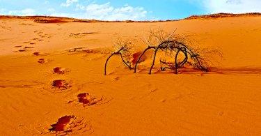 O Deserto Sagrado