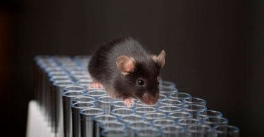 Governo dos EUA canibaliza bebês para que ratos possam viver