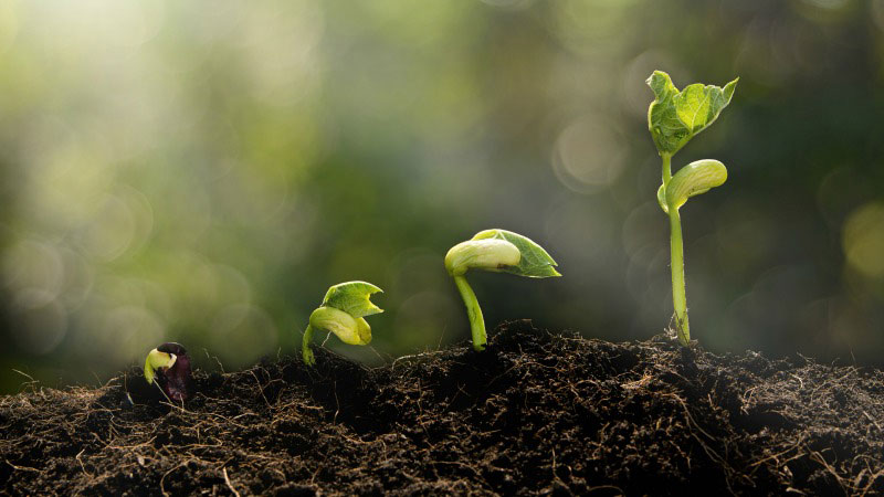 A Brevidade da Vida: Uma Luz Sobre Eclesiastes