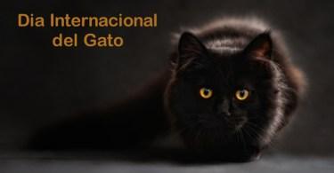 Dia Internacional do Gato!