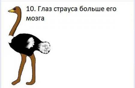 Картинки с интересными фактами - Ёжин.ру