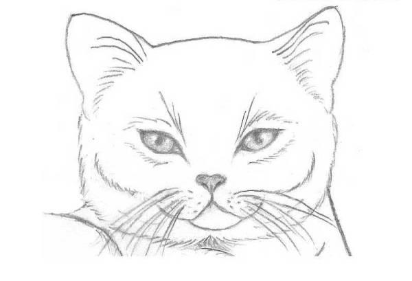 Картинки для срисовки легкие карандашом