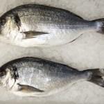ecclesall_fisheries-2442