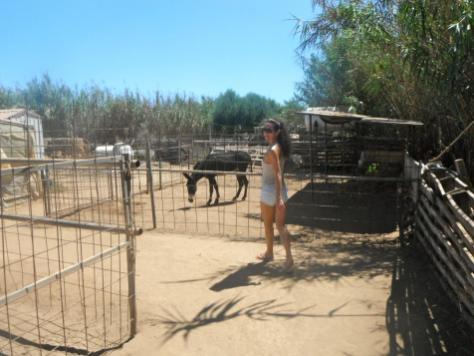 Famagusta mini 'zoo'