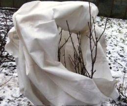 Мероприятия по утеплению растений на зиму