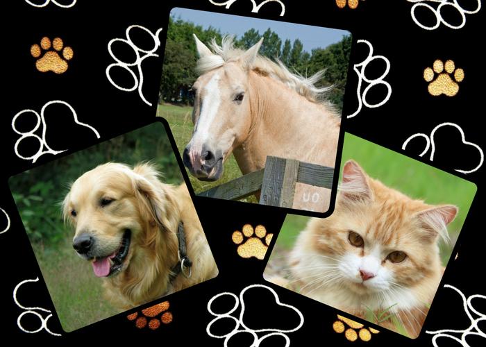 Produkter till husdjur