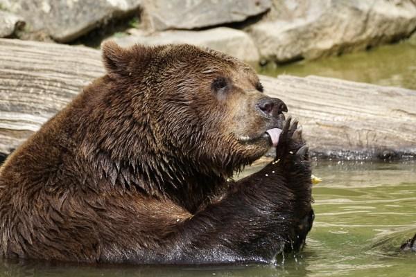 Azionario USA. Entra in scena l'orso?