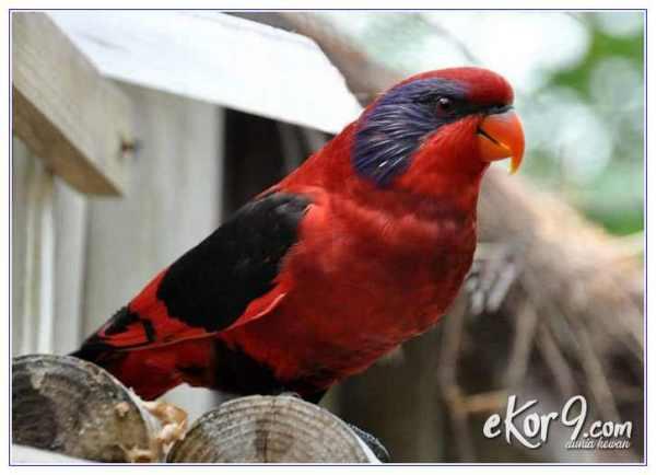 contoh hewan langka di papua adalah, contoh hewan langka endemik di papua, contoh hewan dan tumbuhan langka endemik di papua, contoh hewan langka yang berasal dari papua, daftar hewan langka papua, sebutkan hewan langka endemik di papua, hewan dan tumbuhan langka endemik di papua