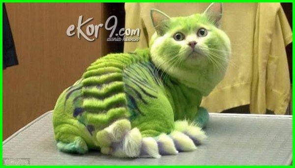 gambar kucing lucu warna hijau, gambar kucing lucu imut dan menggemaskan asli