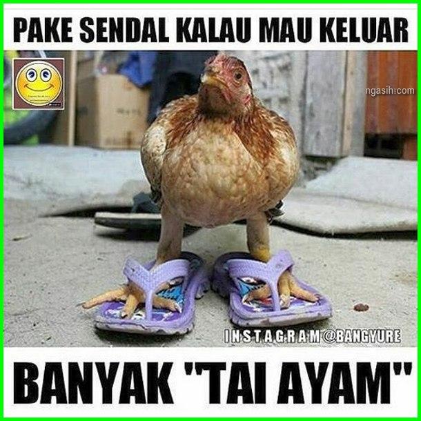 meme eek ayam, gambar ayam pake pakai sendal, gambar ayam dan kata lucu, gambar ayam lucu.com, gambar dp lucu ayam, gambar lucu ceker ayam, gambar ayam dan tulisan lucu