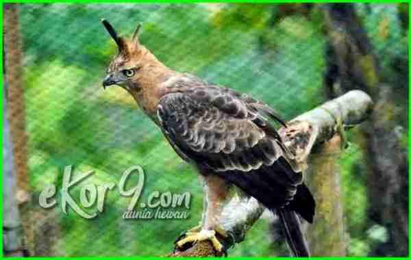 burung langka di indonesia yang hampir punah,suara burung langka di dunia, burung langka termahal di dunia, foto burung langka di dunia, burung hantu langka di dunia, kumpulan burung langka di dunia, nama burung langka di dunia, burung langka di seluruh dunia, burung terlangka di dunia, burung yang langka di dunia, 7 burung paling langka di dunia