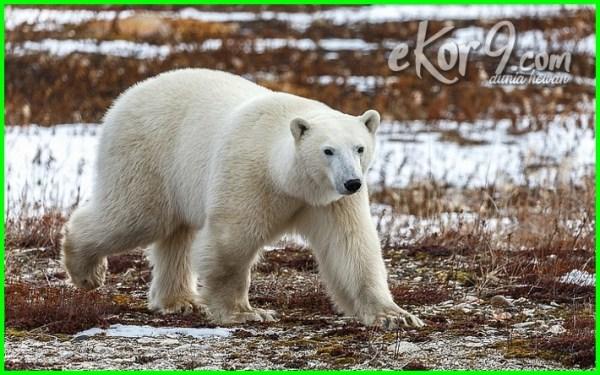 daftar hewan kanibal, definisi hewan kanibal, dunia hewan kanibal, foto hewan kanibal, film hewan kanibal