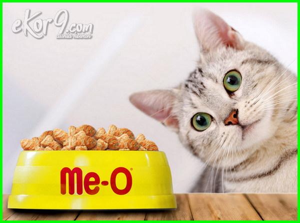 10 Merk Makanan Kucing Terbaik Yang Paling Laris Dan