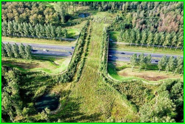 animal bridge in Netherlands