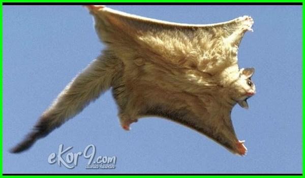 hewan terbang selain burung, hewan yang bisa terbang selain burung, hewan yg bisa terbang selain burung, binatang terbang selain burung, 5 binatang selain burung yang bisa terbang, hewan terbang selain burung