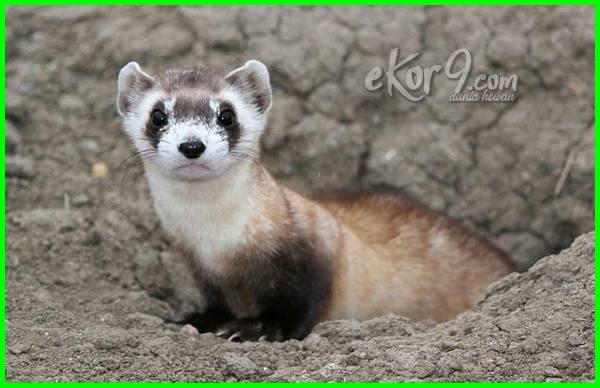 10 hewan yang hidup di tanah, 3 hewan yang hidup di dalam tanah, 5 hewan yang hidup di dalam tanah, 5 hewan yang hidup di tanah, 5 hewan yg hidup di dalam tanah, sebutkan 28 hewan yang hidup di dalam tanah