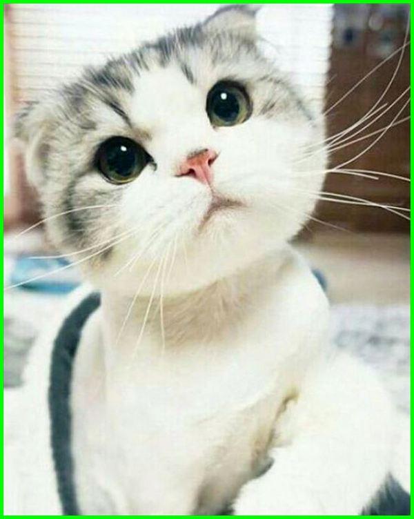 ekspresi wajah kucing tanda tidur terkejut sedih foto marah saat selfie senang lucu paling ngakak