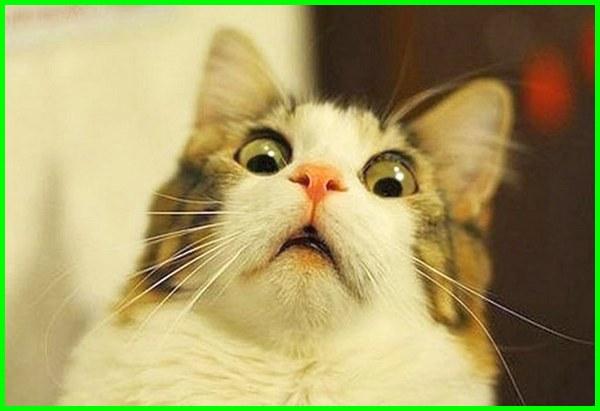 5000 Gambar Kucing Lucu Imut Dan Paling Menggemaskan Sedunia
