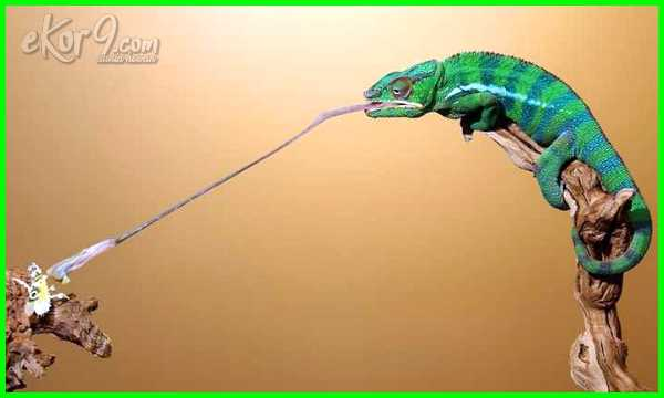 ciri hewan insektivora, 10 hewan insektivora, ciri2 hewan insektivora, kelompok hewan insektivora, nama hewan insektivora, hewan insektivora adalah