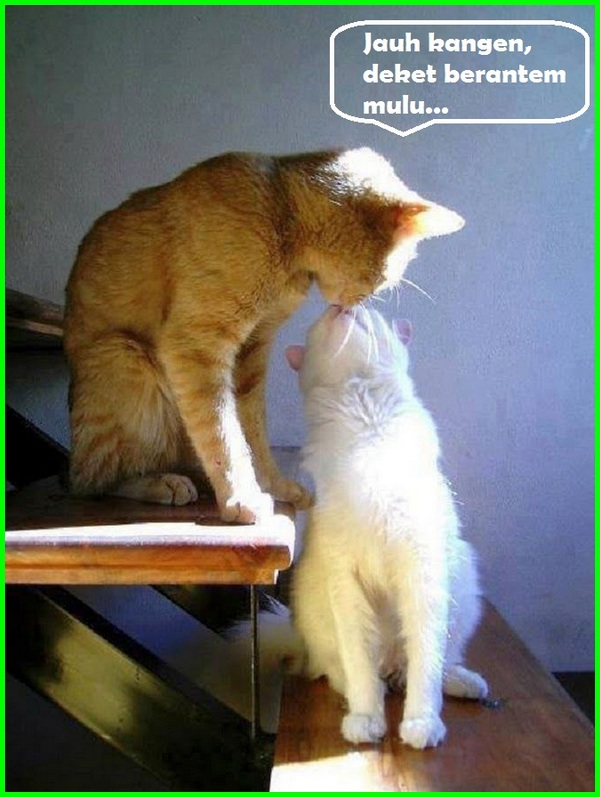 540 Gambar Kucing Dan Kata Kata Romantis Gratis