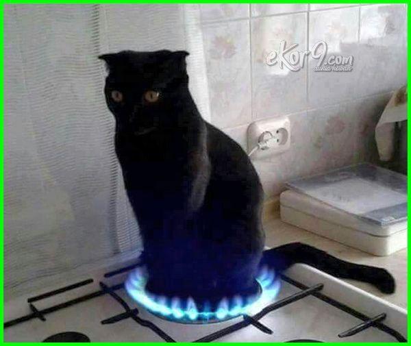 gambar kucing keren lucu, gambar kucing lucu didunia, gambar kucing lucu dp bbm