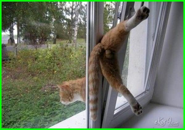 kucing terjepit, kucing terjebak