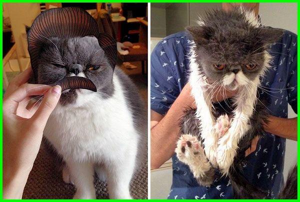 kucing mandi lucu bola video lagu gambar si meong download anak foto
