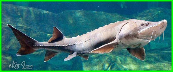 hewan panjang umur, panjang umur, hewan panjang umurnya, hewan paling panjang umur, hewan yang panjang umur, hewan peliharaan panjang umur
