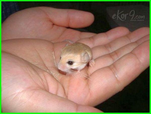 hewan peliharaan ukuran kecil, hewan peliharaan kecil lucu, hewan peliharaan yang berukuran kecil, hewan peliharaan kecil dan lucu, hewan peliharaan paling kecil, hewan peliharaan untuk rumah kecil, hewan kecil untuk peliharaan, hewan peliharaan yg kecil, binatang peliharaan yang kecil