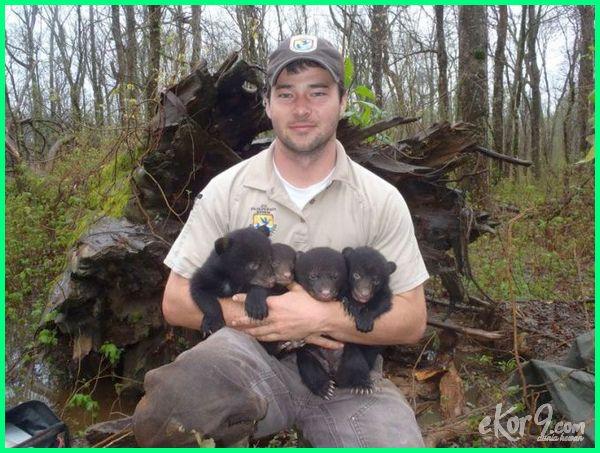 animal extinction articles