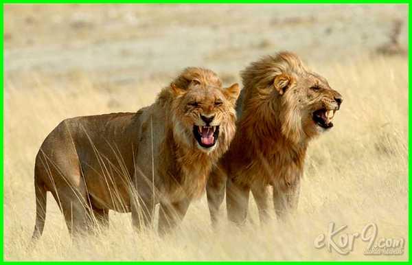 hewan yg paling banyak membunuh manusia, hewan yang paling sering membunuh manusia, hewan yg paling sering membunuh manusia