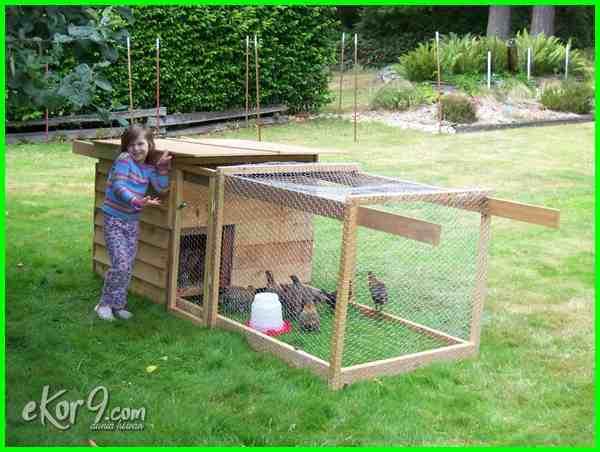 gambar kandang ayam dari kayu, desain kandang ayam sederhana, desain kandang ayam minimalis, cara membuat kandang ayam intensif, cara membuat kandang ayam indukan, cara membuat kandang ayam hias, cara membuat kandang ayam hutan, cara membuat kandang ayam dan gambar, foto desain kandang ayam