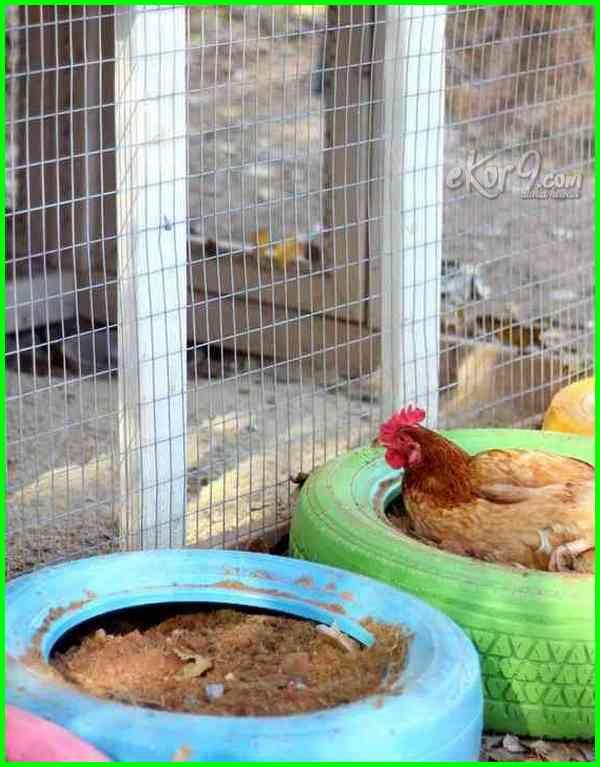 Ban Bekas Pun Bisa Kelihatan Keren Sebagai Tempat Mandi Ayam Kamu Tinggal Memberi Warna Cerah Yang Membuatnya Tampil Lebih Stunning