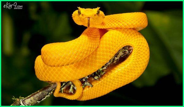 hewan nokturnal adalah, hewan nokturnal apa saja, hewan nokturnal apa artinya, aktivitas hewan nokturnal, yang termasuk hewan nokturnal adalah, yang dimaksud hewan nokturnal adalah, hewan nokturnal beraktivitas pada waktu, hewan nokturnal lucu