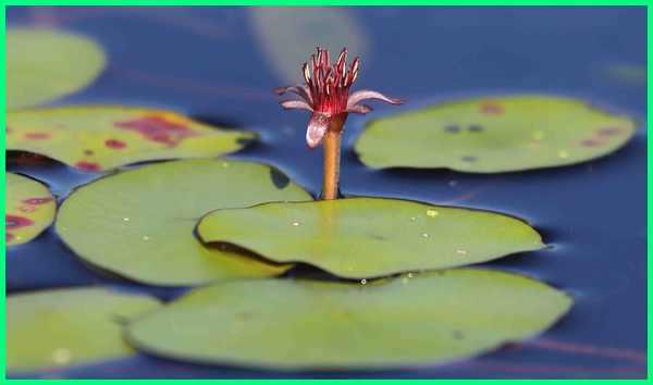 tanaman yang berfungsi sebagai peneduh kolam ikan