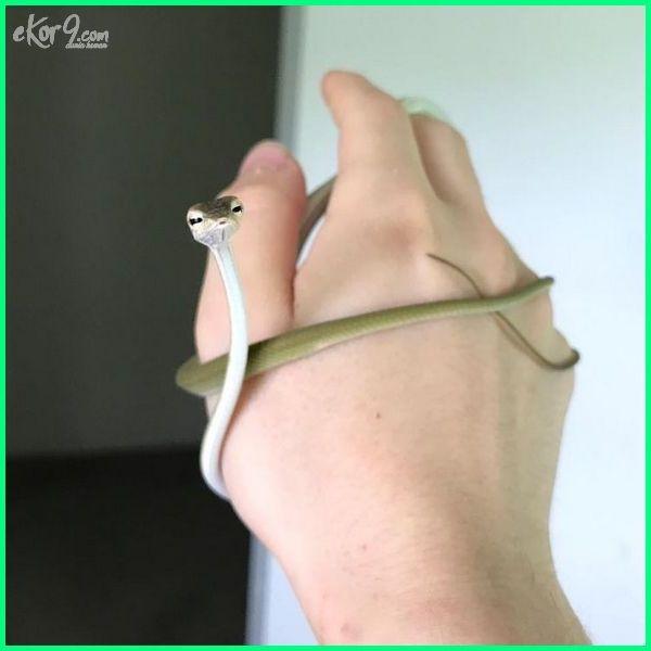dp bbm ular lucu