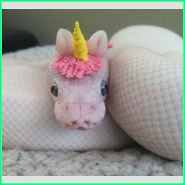 ular lucu dan unik